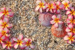 Leelawadee flower with shell Stock Photo
