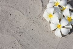 Leelawadee flower on the white sand Stock Image