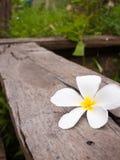 Leelawadee flowers white. Royalty Free Stock Images