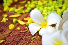 Leelawadee kwiat Obrazy Stock