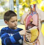 Leer biologie in school stock afbeelding