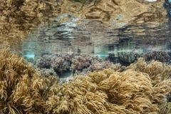 Leer Coral Colonies in Ondiep Water stock foto's