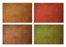 Leer in vier kleuren Royalty-vrije Stock Foto