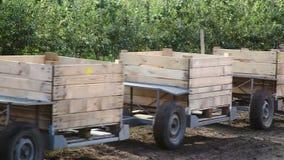 Leercontainer für das Sammeln von Äpfeln stock footage