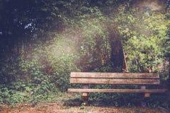 Leere alte Holzbank in einem schattigen Bereich des Gartens oder des Parks Stockfoto