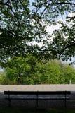 Leere Bank mitten in einem Park unter einem grünen Baum Lizenzfreie Stockfotografie