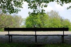 Leere Bank mitten in einem Park unter einem grünen Baum Lizenzfreies Stockfoto