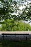 Leere Bank mitten in einem Park unter einem grünen Baum Lizenzfreies Stockbild
