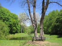 Leere Bank nahe zwei Bäumen und See im Hintergrund des Waldes Stockfoto