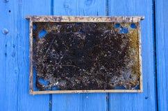Leere Bienenwabe auf blauem hölzernem Hintergrund Stockfotografie
