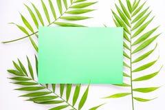 Leere blaue Karte auf tropischen Palmblättern, Sommerferienkonzept, Schablonenplan für das Addieren Ihres Entwurfs oder Textes  lizenzfreies stockbild