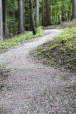 Leere Fahrradspur im Wald Stockbild