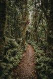 Leere Gehwegspur im tropischen Wald lizenzfreie stockfotos