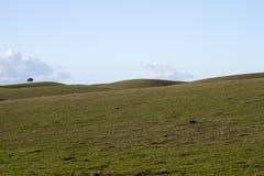 Leere grüne Hügel mit sehr wenigen Einzelbäumen Stockbilder