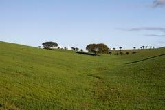 Leere grüne Hügel mit sehr wenigen Einzelbäumen Stockbild