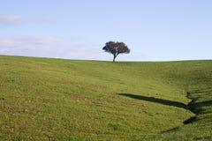 Leere grüne Hügel mit sehr wenigen Einzelbäumen Lizenzfreie Stockfotografie