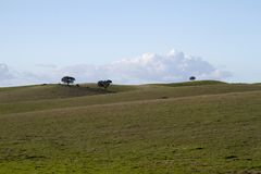Leere grüne Hügel mit sehr wenigen Einzelbäumen Stockfoto