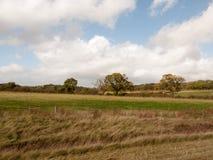 Leere Hügelseitenszene im Land mit Bäumen im Abstand und im Blau Lizenzfreie Stockfotos