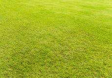 Leere hellgrüne Rasenfläche Stockfoto