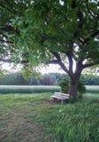Leere Holzbank unter einem Baum Stockfoto