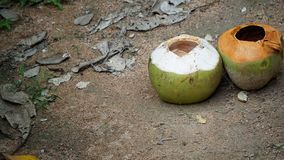 Leere Kokosnüsse lizenzfreie stockfotografie