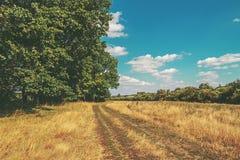 Leere Landschaftsstraße durch Felder mit Weizen Ländlicher Landscap Stockbild