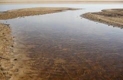 Leere Miesmuscheloberteile, liegend auf dem Sand lizenzfreies stockbild