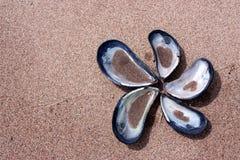 Leere Miesmuschelshells auf sandigem Strand Stockfoto