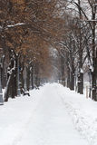 Leere Parkgasse im Winter Stockfoto