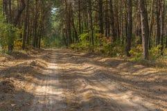 Leere sandige Straße im Kiefernwald Lizenzfreie Stockbilder