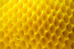 Leere Sonnenblumezellen Stockfotos