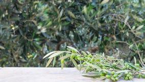 Leere Steintabelle mit unscharfer Olivenbaumhintergrund Schablone für Anzeige des Produktes stockfoto