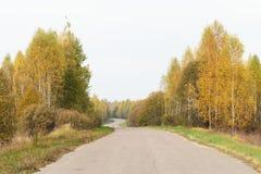 Leere Straße in der Herbstlandschaft mit gelben birchtrees Lizenzfreie Stockfotografie