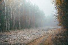 Leere Straße in der Landschaft mit Herbstwald in der Perspektive lizenzfreie stockfotos