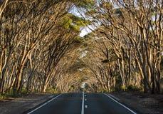 Leere Straße durch das Eukalyptusholz australien Sonniger Tag stockbild
