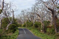 Leere Straße durch das trockene Spätholz australien Unten fallen Wald lizenzfreies stockbild