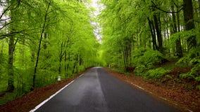 Leere Straße in einer grünen Frühlingswaldasphalt-Landschaftsstraße einer Gebirgswaldgebirgsstraße auf Jahreszeit Vorfrühling in stock video footage