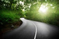 Leere Straße im Dschungel Stockfotos
