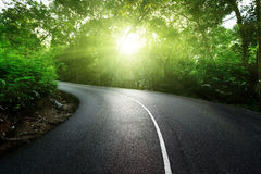 Leere Straße im Dschungel Lizenzfreies Stockbild