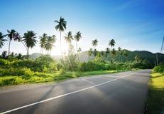 Leere Straße im Dschungel Stockbild