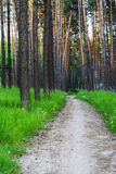 Leere wandernde Spur mit grünem Gras und Bäumen Lizenzfreies Stockfoto