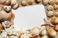 Leere weiße Karte mit exotischen Muscheln liegt auf einem sonnigen Hintergrund des Meersandsommers Lizenzfreies Stockfoto