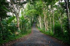 Leeren Sie die alte Straße im Dschungel mit gefallenen Blättern Lizenzfreie Stockfotos