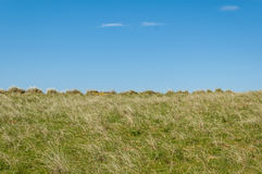 Leeren Sie lange Rasenfläche mit blauem Himmel im Hintergrund Stockfoto
