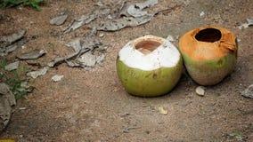 Leeren Sie zwei Kokosnüsse auf dem Sandboden stockfotografie