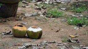 Leeren Sie zwei Kokosnüsse auf dem Sandboden stockbilder
