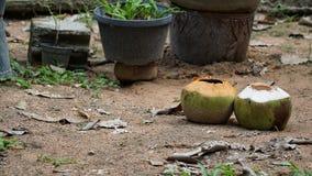 Leeren Sie zwei Kokosnüsse auf dem Sandboden lizenzfreie stockbilder