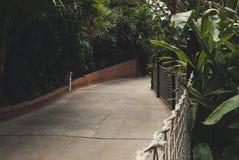 Leerer Bürgersteig unter Dschungel arbeitet mit Seilnetz im Garten lizenzfreie stockfotografie