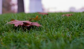 leerer Blatthintergrund auf Gras lizenzfreie stockfotografie