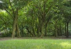 Leerer Gehweg zum grünen Garten Stockfotografie